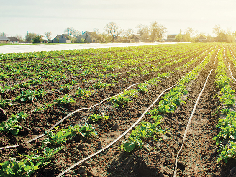Above surface drip irrigation for broadacre farming